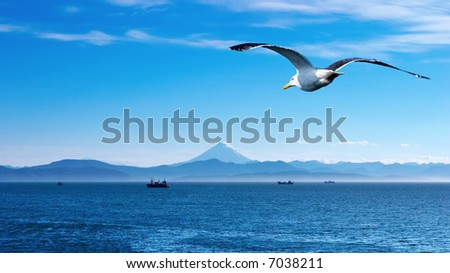 Blue sky, ocean and flaying seagull - stock photo