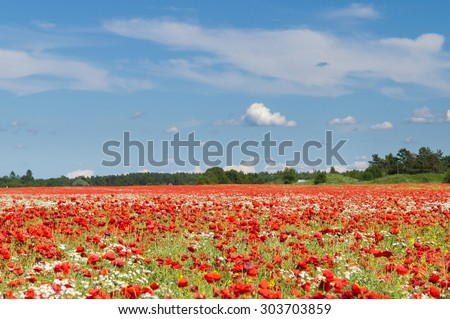 Blue sky over poppy flowers field, rural landscape - stock photo