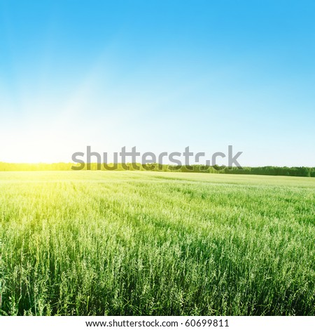 Blue sky,sun and green wheat field. - stock photo