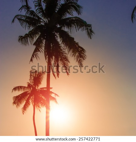 Blue sky through palm trees. Vintage filter - stock photo