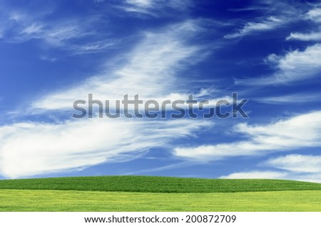 Blue sky with cirrus clouds over light green wheat fields in the Pacific Northwest