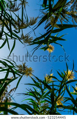 Blue sky with desert greenery