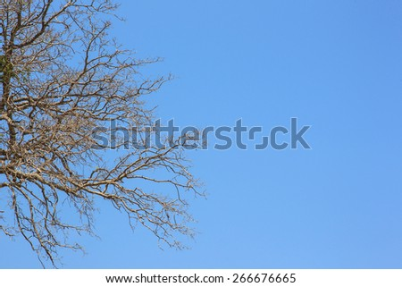 Blue sky with dry tree as background and enter text - stock photo