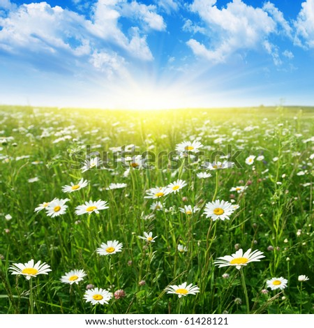 Blue sky with sun and daisy field. - stock photo