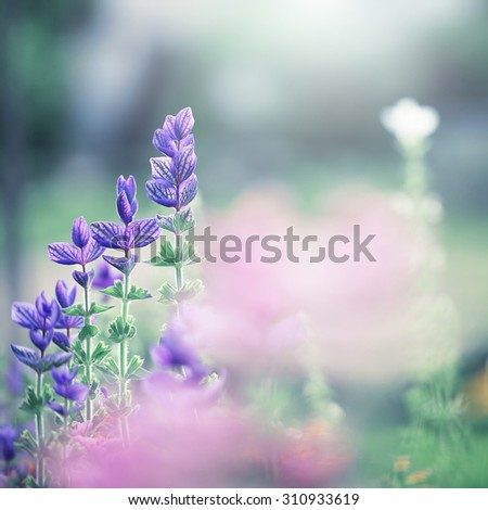 blue soft flowers in flowerbed in garden. Nature background - stock photo