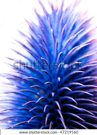 Blue spikes with tight focus - stock photo