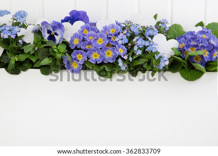 Blue spring flowers with hearts on wooden white background for decoration.