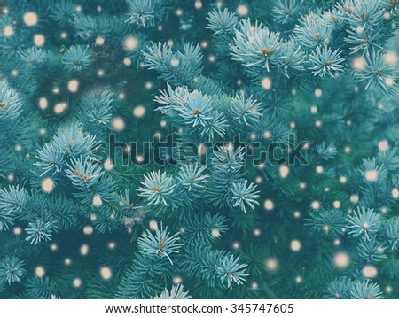 Blue spruce background with falling snow,christmas magic toned effect. Greeting card - stock photo