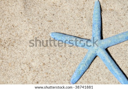 blue starfish / sea star on sand room for text - stock photo
