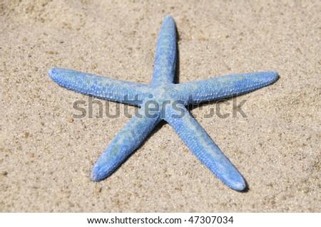 blue starfish, sea star sitting on sand - stock photo