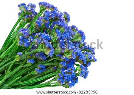 blue straw flowers  isolated on white background