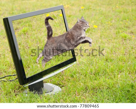 Blue tabby cat leaping out of a computer monitor onto green grass - stock photo