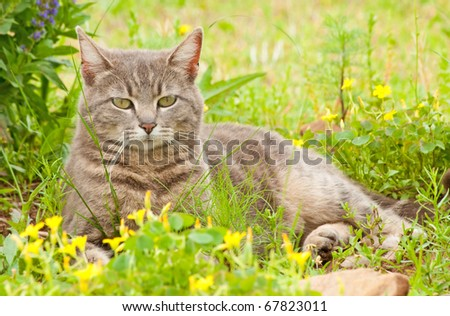 Blue tabby cat surrounded by wildflowers - stock photo