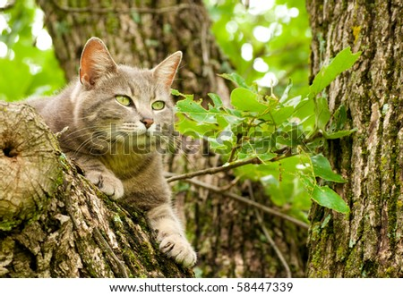 Blue tabby cat with green eyes up in a tree - stock photo