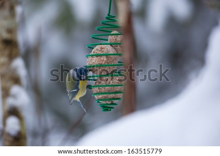 Blue tit at a bird feeder - stock photo