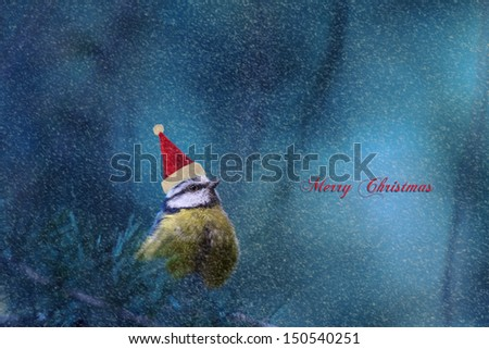 Blue Tit Perched on a Pine Tree Branch with his Christmas Hat on in the Winter During a Snowstorm. - stock photo