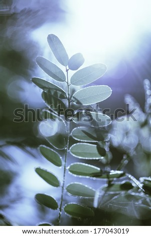 Blue toned Gentle  leaves during sunrise  - stock photo