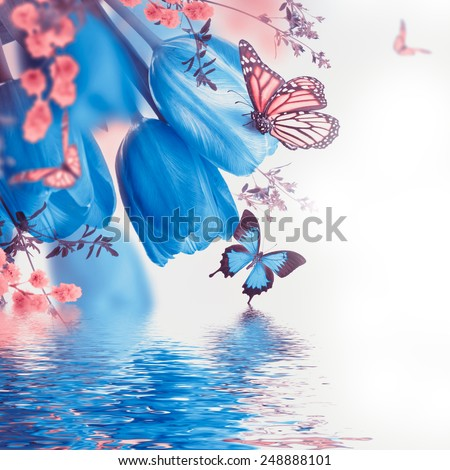 Blue tulips with mimosa and butterfly, spring background - stock photo
