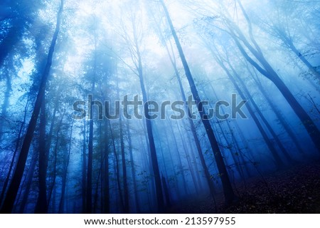 Blue twilight mood in a beech forest with bare tall trees and dense fog - stock photo
