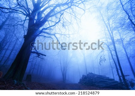 Blue twilight mood on a walking path in a beech forest with bare tall trees and dense fog - stock photo