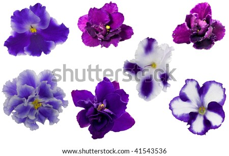 blue violet flowers collection isolated on white background - stock photo