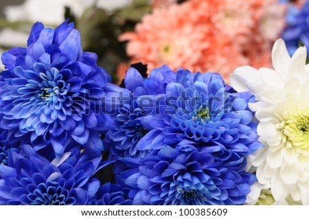 Blue, white and pink flowers asters for background or texture - stock photo
