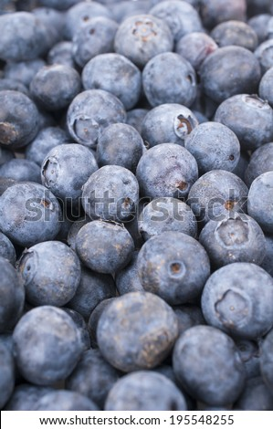 Blue Whortleberry (Vaccinium myrtillus) - stock photo