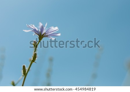 Blue wild flower on the sky background