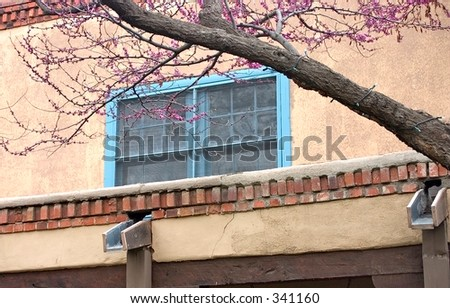 Blue window in an adobe wall  framed by a tree along a courtyard in Santa Fe, NM. - stock photo