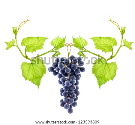 Blue wine grape isolated on white background - stock photo