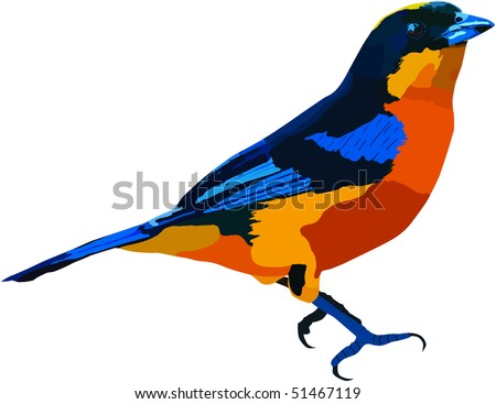 Blue Winged Mountain Tanager found in the Ecuadorian Rain Forest. Available as Vector - stock photo