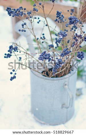 Blue Winter Berries In Vintage Watering Pot Can On Snow Background The Garden