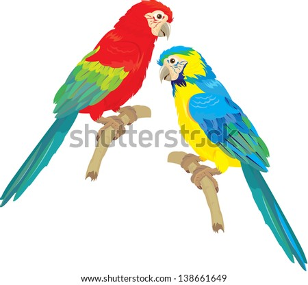 Blue Yellow and Red Blue Macaw parrots isolated on white background. Raster version - stock photo