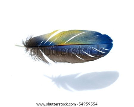 Blue yellow Macaw feather isolated - stock photo