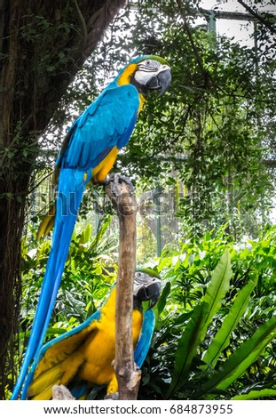 Blue-yellow parrot perched on a perch