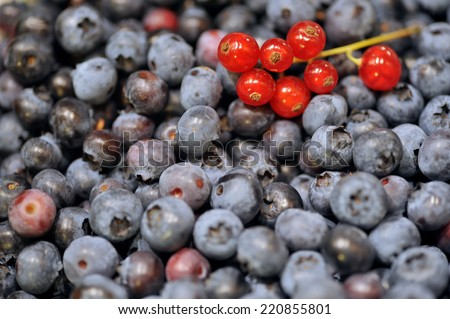 Blueberries and redcurrants - stock photo