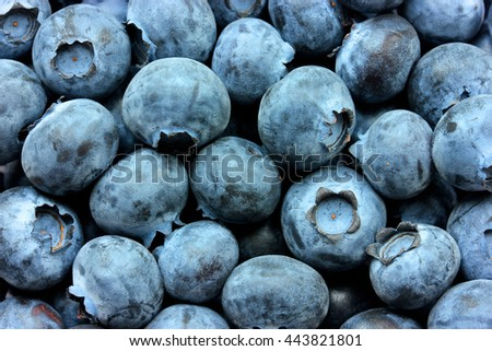 Blueberry beautiful organic food background - stock photo