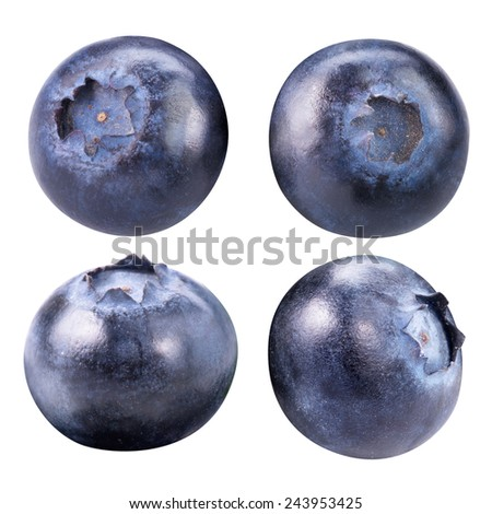 blueberry berries collection isolated on white - stock photo