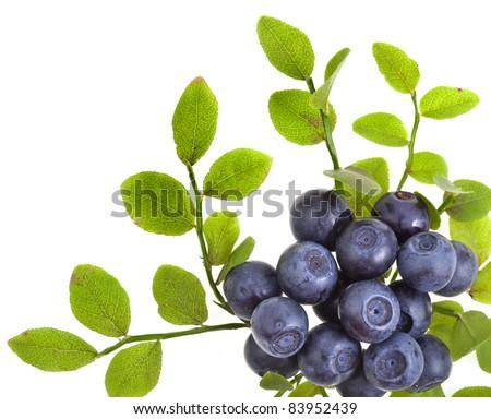 blueberry border closeup macro isolated on a white background - stock photo