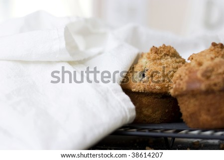 Blueberry muffins partially covered by a flour sack towel. - stock photo