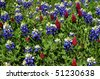 Bluebonnets and Crimson Clover Horizontal - stock photo