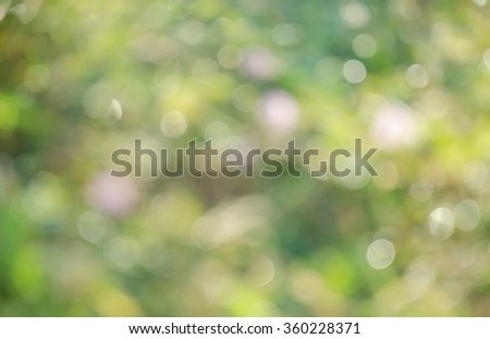 Blur and bokeh background