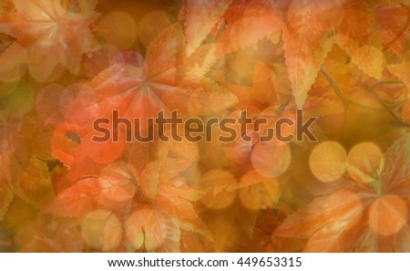 Blur and soft focus of maple leaf texture abstract background with bokeh light