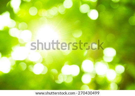 Blur background of foliage. Nature composition. - stock photo