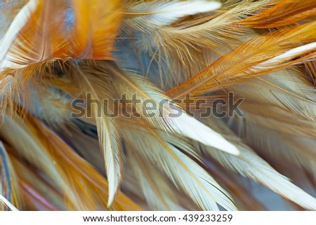 Blur brown chicken feather abstract texture vintage background