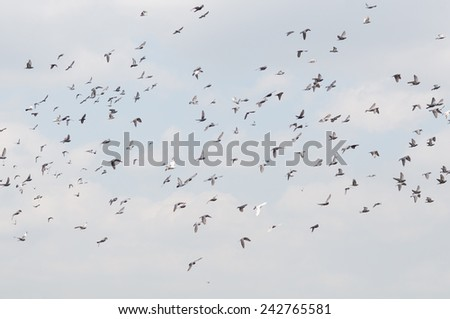 blur dove on a background of blue sky  - stock photo