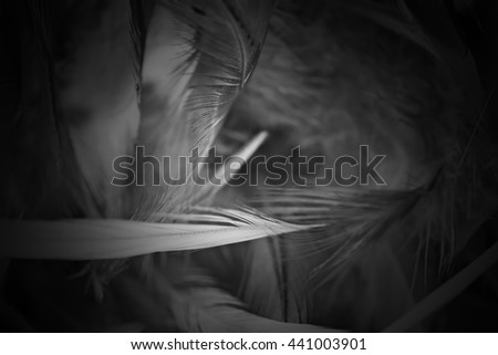 blur feather wool dark black texture background