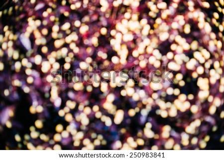 blur flowers in the morning sunlight (Bokeh) , Stars on Earth  - stock photo