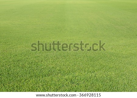 blur green grass for background - stock photo