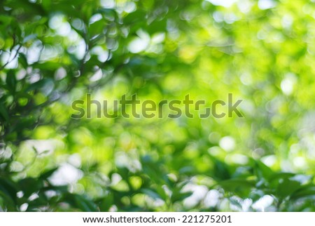 Blur green leaves with bokeh, abstract background, template